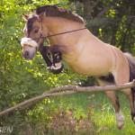 Meine Ponys und das Springen