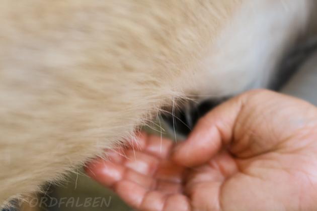 Kokosöl Pferd