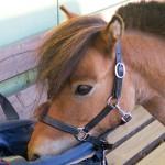 12 Drogerieprodukte für Pferd und Reiter