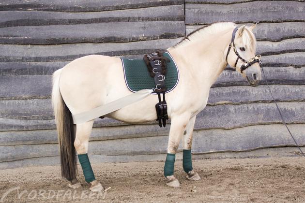 pferd (5)