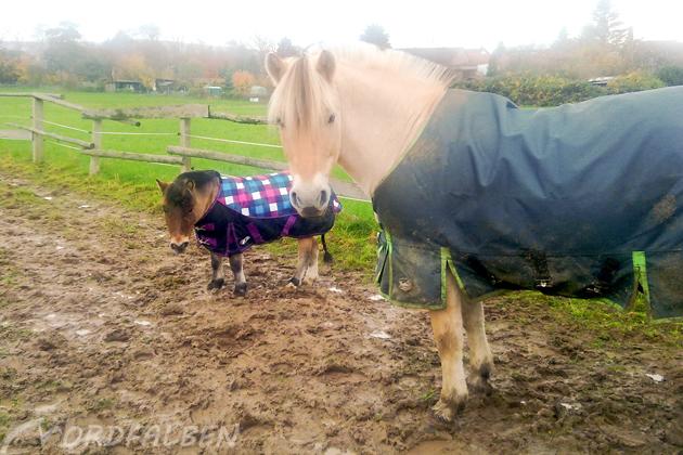 Eindecken Pferd
