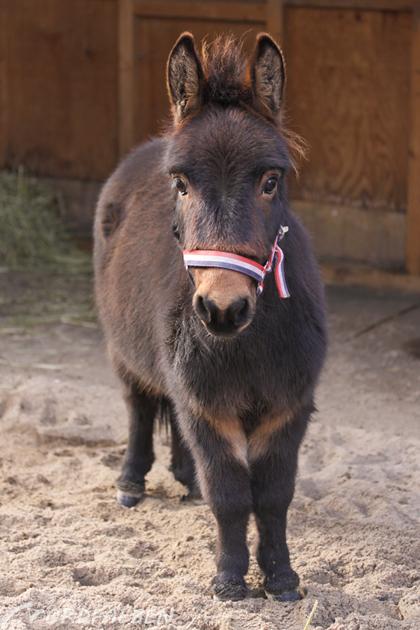 Mini-Muli