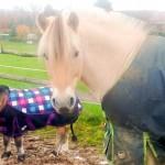Eindecken, Scheren und der Wärmehaushalt der Pferde