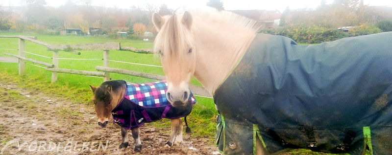 eindecken scheren und der wrmehaushalt der pferde - Pferd Scheren Muster
