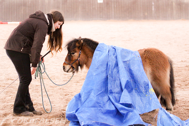 Gelassenheit Pferd