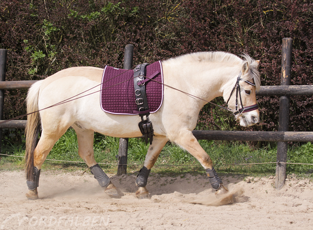 Abschnauben Pony