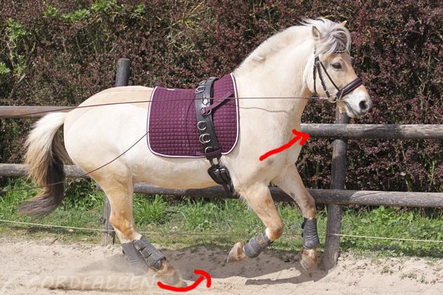 Schiefe des Pferdes