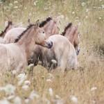 Wildpferde in Aschaffenburg