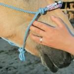 Wohltuende Massage fürs Pferd: So geht es richtig!