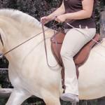Ist mein Pferd wirklich gerade gerichtet?