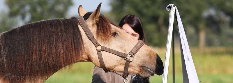 horsebond-11