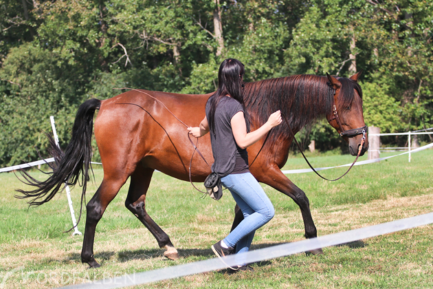 horsebond-26