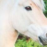 Einstieg in die Pferdefotografie – die Bildgestaltung (Teil 1)