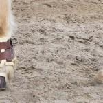DIY-FRIDAY: Bandagierunterlagen, Hufglocken, Bandagen & co – weniger ist mehr!