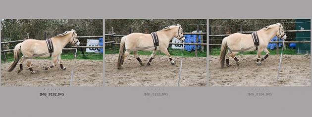 Pferdefotografie Kamera