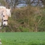 Testbericht: Glücksrad LG-Zaum für Merlin