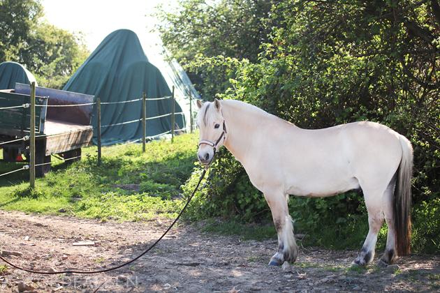 Pferdefotografie Bildgestaltung