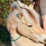 Einstieg in die Pferdefotografie – Umgang mit dem tierischen Model