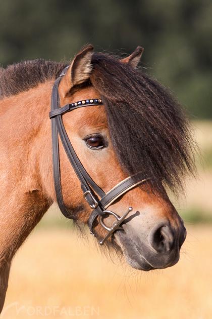Portraits Pferdefotografie