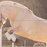 Einstieg in die Pferdefotografie – Bilder in Bewegung