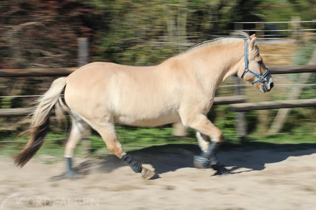 Pferdefotografie Bewegung
