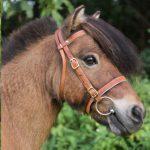Welches Reithalfter für mein Pferd?