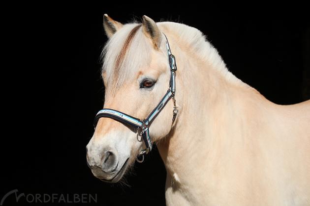 Schwarzer Hintergrund Pferd
