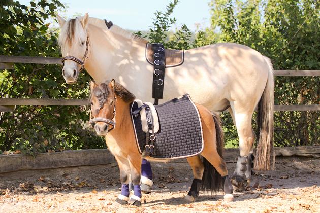 Minimalismus Pferd