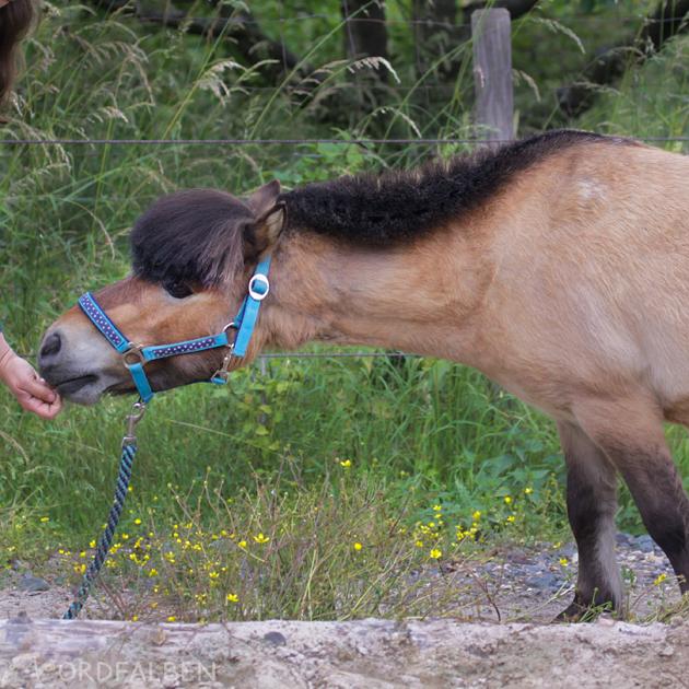 Dehnübungen Pferd
