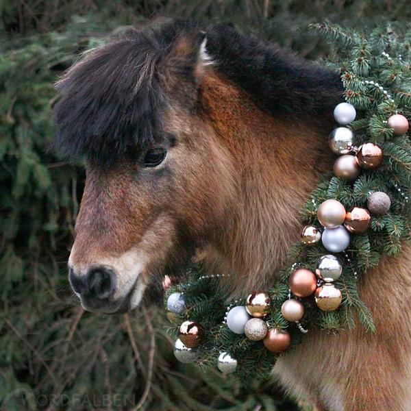 Tannenkranz Pferd
